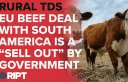 Irish Rural TDs: EU and South American beef deal is selling out Irish beef farmers