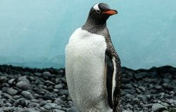 Good news: World's first non-gender-binary penguin born
