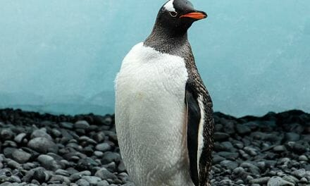 Good news: World's first non-gender-binary penguin born