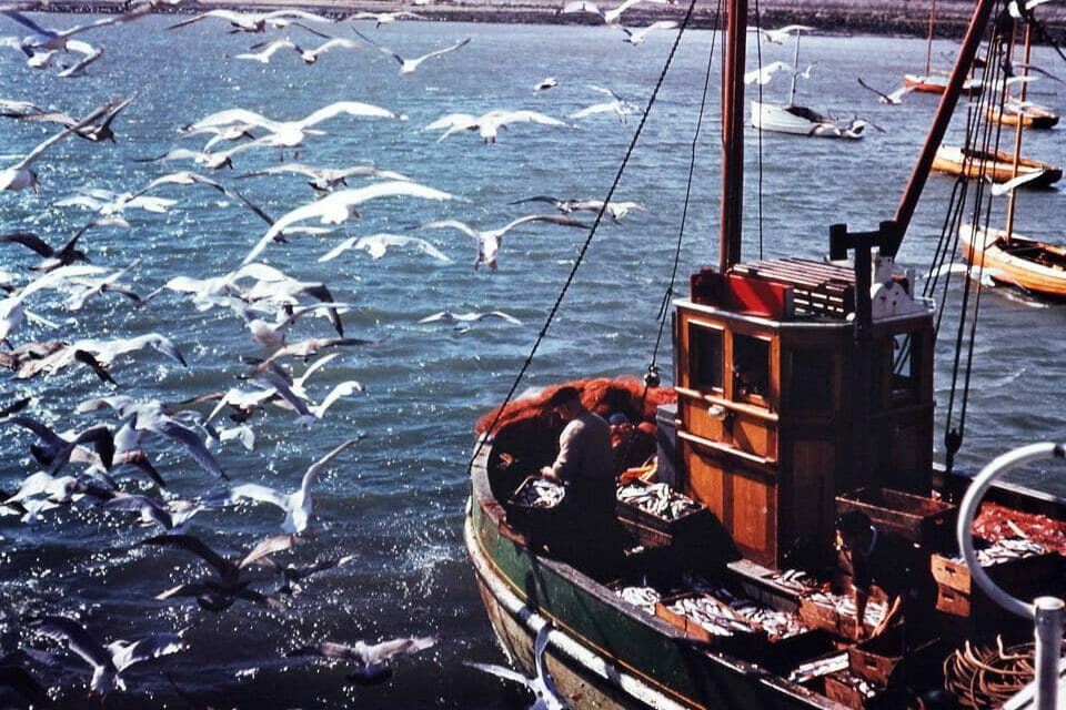 Fishing industry in meltdown as export markets collapse