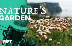 Nature's Garden 01 - Give your garden to nature