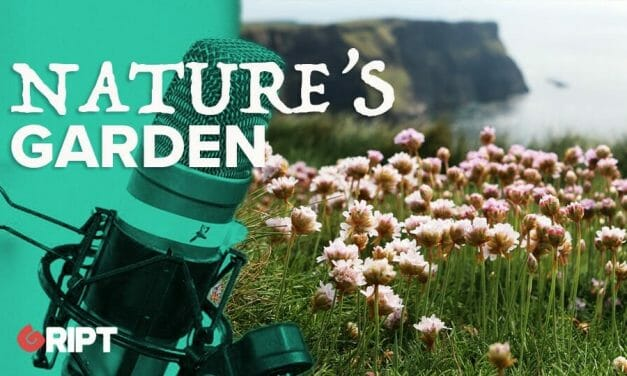 Nature's Garden 01 – Give your garden to nature