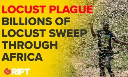 The world may soon be grappling with another crisis – a locust plague