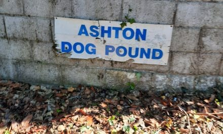 EXCLUSIVE: Ashton Dog Pound searched by Gardai over animal welfare concerns