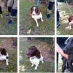 Important: Do you know who owns these stolen dogs?