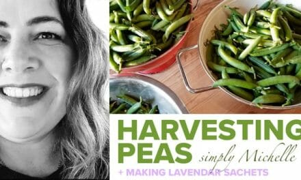 Homegrown Home: Learn how to harvest peas and make beautiful lavendar sachets